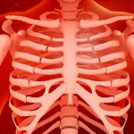 graphic of ribcage and shoulders